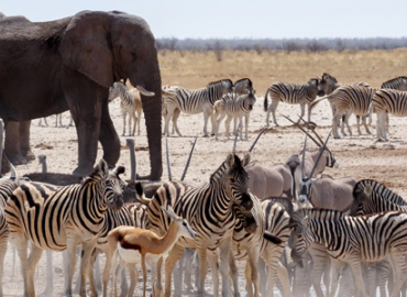 3 Days Etosha or Sossusvlei Express Safaris